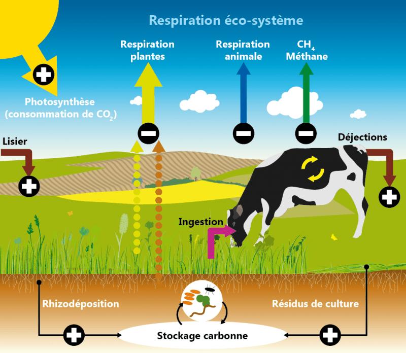 Respiration éco-système